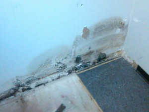 mold removal in scottsdale