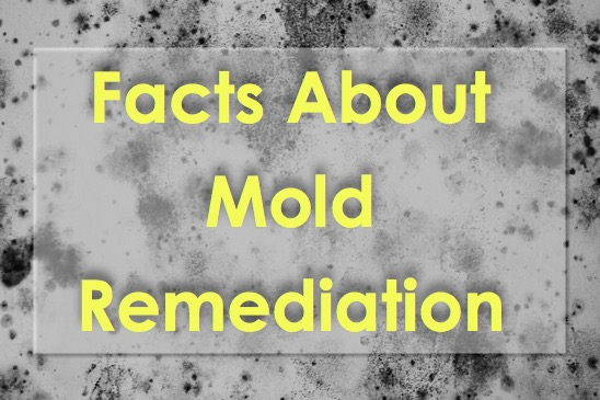 Mold Remediation Services in Phoenix